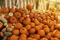 Pumpkins gourds fence orange and in front of Royalty Free Stock Image