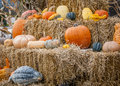 Pumpkins and gourds placed on hay bales Stock Photos