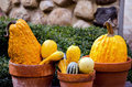 Pumpkins and gourds in pots display of clay terre cotta plants Royalty Free Stock Photos