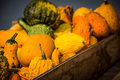 Pumpkins and gourds at roadside colorful stand Stock Photography