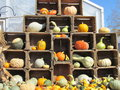 Pumpkins gourds squash a display of and all mean harvest time in vermont Stock Photo