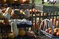 Pumpkins, Gourds And Squash