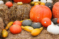 Pumpkins and gourds on straw Royalty Free Stock Image
