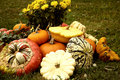 Pumpkins on the Grass Royalty Free Stock Image
