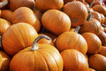 Pumpkins group of at a meadow Royalty Free Stock Image