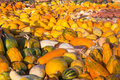 Pumpkins halloween thanksgiving colorful harvest in autumn Royalty Free Stock Image