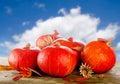 image photo : Pumpkins