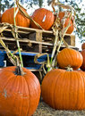 Pumpkins harvest fair with nice bright orange Stock Photo