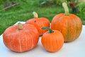Pumpkins harvest Royalty Free Stock Photo