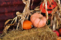 Pumpkins on hay bales with corn stalks at harvest Royalty Free Stock Photo