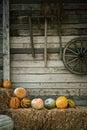 Pumpkins on a Hay near Royalty Free Stock Photo