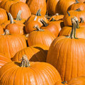 Pumpkins at market. Stock Photos