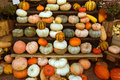 Pumpkins in a market on stall local whole food Stock Photography