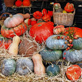 Pumpkins on market still life in variety of Royalty Free Stock Photos