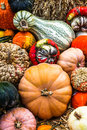 Pumpkins mix colored food background Stock Photos