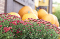 Pumpkins and mums at the local market Royalty Free Stock Photo
