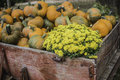 Pumpkins and mums old wagon full of at eagle fork family farms in moscow mills mo Stock Photos