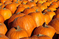 Pumpkins orange halloween in horizontal orientation Stock Photography
