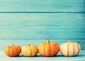 Pumpkins over wood vintage turquoise Stock Image