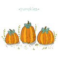 Pumpkins patch vector illustration perfect background with hand drawn Stock Photo
