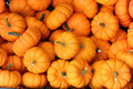 Pumpkins in a pile Royalty Free Stock Photo