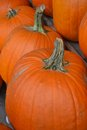 Pumpkins pumpkins pumpkins in a row on wooden stand Stock Images