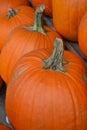 Pumpkins pumpkins pumpkins in a row on wooden stand Stock Images