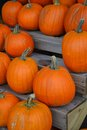 Pumpkins pumpkins pumpkins several orange on a wooden stand Stock Photo