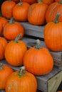 Pumpkins pumpkins pumpkins several orange on a wooden stand Stock Photo