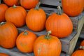 Pumpkins pumpkins pumpkins several orange on a wooden stand Royalty Free Stock Photo