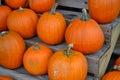 Pumpkins pumpkins pumpkins several orange on a wooden stand Royalty Free Stock Photo
