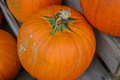 Pumpkins pumpkins pumpkins several orange on a wooden stand Stock Photos