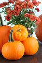 Pumpkins and rust colored mums Royalty Free Stock Photos