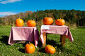 Pumpkins for Sale Royalty Free Stock Image