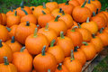 Pumpkins for sale in austria Royalty Free Stock Photography