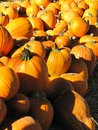 Pumpkins for sale in a bright day Stock Photography