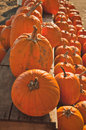 Pumpkins for sale at country store numerous lined up a rural Stock Photos