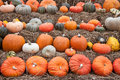 Pumpkins for sale at Dutch market Royalty Free Stock Photography