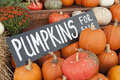 Pumpkins for sale an image of halloween Stock Images