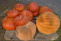 Pumpkins for sale pumpins at pallet ready to sell Royalty Free Stock Photo
