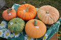 Pumpkins for sale pumpins at a table with price tags attached Stock Photography
