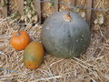 Pumpkins a season specific vegetable Royalty Free Stock Photos
