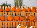 Pumpkins at shelves for sale during a sunny bright day Royalty Free Stock Photo