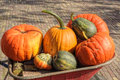 Pumpkins squash Royalty Free Stock Image
