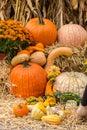 Pumpkins Squash And Gourds