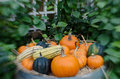 Pumpkins and squash in selective focus Royalty Free Stock Image