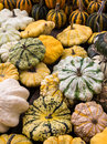 Pumpkins and squashes on display a variety of gourds of the family cucurbitaceae for sale in a market Stock Photos