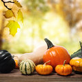 Pumpkins and squashes with a shinning fall background assorted on rustic wooden boards an autumn backdrop Stock Images
