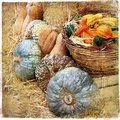 Pumpkins still life Royalty Free Stock Images