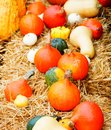 Pumpkins in the straw bed of various sizes and colors presented on a bale Royalty Free Stock Photos